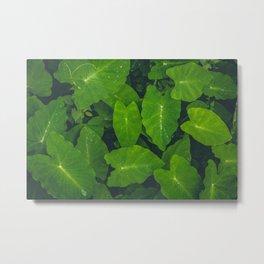 Beautiful green leaves in macro Metal Print
