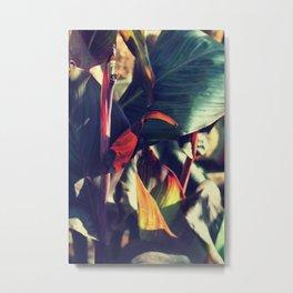Canna indica #5 Metal Print