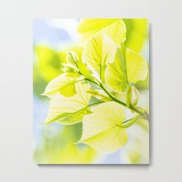 Delicate leaves lit by the spring sun Metal Print