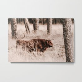 Scottish Highlander Photo | Wildlife Photography Art Print | Scottish Highlander In Deelerwoud Metal Print