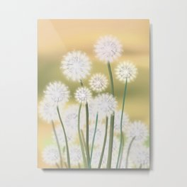 Dandelions in the morning sun Metal Print