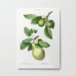Vintage Pear Poster Metal Print