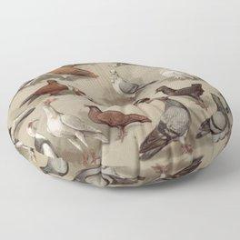 Vintage Pigeon Breeds Chart Floor Pillow