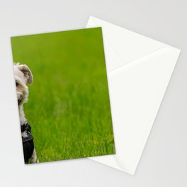 Shorkie dog with harness on Stationery Cards