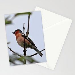 Chaffinch, Fringilla coelebs Stationery Cards