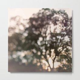 Light Through Autumn Trees Metal Print
