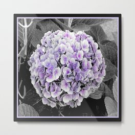 Purple Hydrangea | Nadia Bonello Metal Print