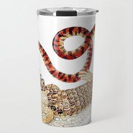 Spectacled Caiman and a False Coral Snake by Maria Sibylla Merian c.1705-10 // Wild Animals Decor Travel Mug