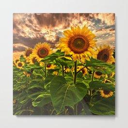 Sunflowers at Sunset Metal Print