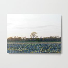 Solitary tree in the Ticino river natural park during winter before sunset Metal Print