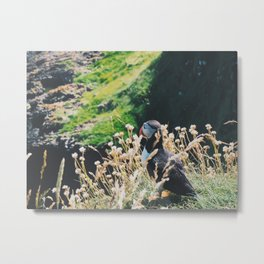 Puffin On Staffa Island Metal Print