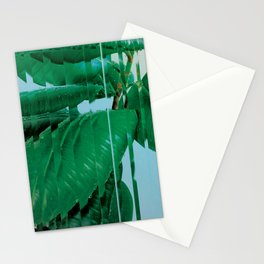 Plant After Rain / Ficus Elastica Stationery Cards