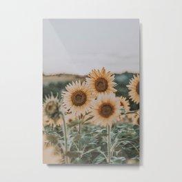 sunflower field ii Metal Print
