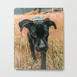 Doggy in the Field // Rust Filter Hiking by Rustic Abandoned Log Cabin Summit Colorado Metal Print