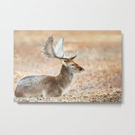 Portrait of a Fallow deer Metal Print