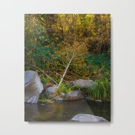 Tree Branch by the Creek Metal Print