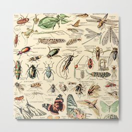 Vintage Insect Identification Chart // Arthropodes by Adolphe Millot XL 19th Century Science Artwork Metal Print
