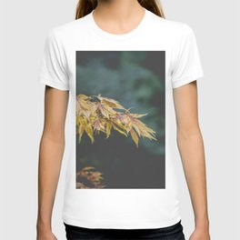 Faded Yellow Acer Leaves T-shirt