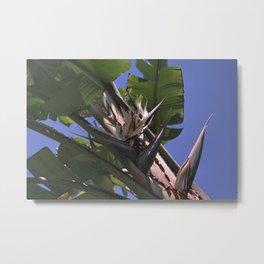 White Bird of Paradise - Strelitzia nicolai Metal Print