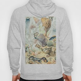 Ocean by Adolphe Millot // XL 19th Century Starfish Jellyfish Coral Reef Science Textbook Artwork Hoody
