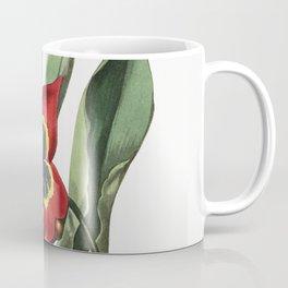Rough stemmed tulip from Edwardss Botanical Register (1829-1847) by Sydenham Edwards John Lindley an Coffee Mug
