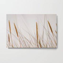 Beach grass   Calm natural fine art print   Netherlands Metal Print
