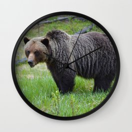 Grizzly encounter in Jasper National Park Wall Clock