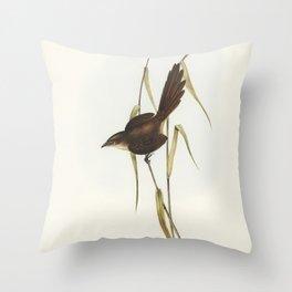 Bristle Bird (Dasyornis Australis) illustrated by Elizabeth Gould (1804-1841) for John Goulds (1804- Throw Pillow