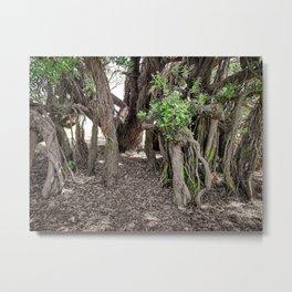 Spooky Old Trees. Metal Print