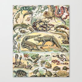 Reptiles by Adolphe Millot // XL 19th Century Snakes Lizards Alligators Science Textbook Artwork Canvas Print