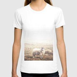 Sheep, Ireland. T-shirt