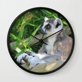 Cute and relaxed Ring-tailed lemur (lemur catta) Wall Clock