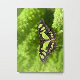 Beautiful Malachite Butterfly Metal Print