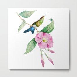 Hummingbird with blue tail Metal Print