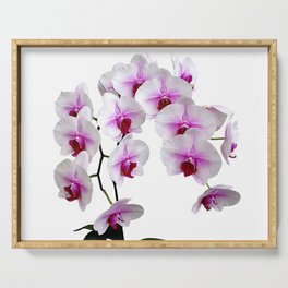 White and red Doritaenopsis orchid flowers Serving Tray