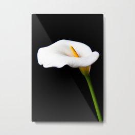 Lily Naturale Metal Print