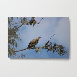 Observant Vultures Metal Print