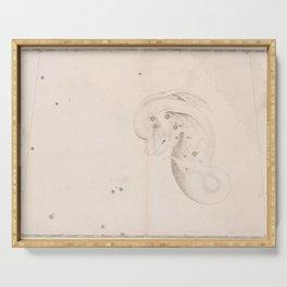 Johann Bayer - Uranometria / Measuring the Heavens (1661) - 17 Delphinus Serving Tray
