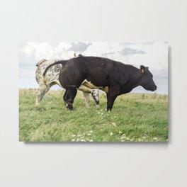 The Pissing Cow @ Zwarte haan (Black Cock) The Netherlands, Friesland Metal Print