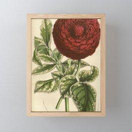 Flower dahlia a feuilles panachees20 Framed Mini Art Print
