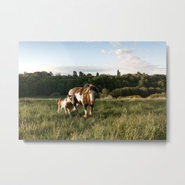 Horse and Pony Metal Print