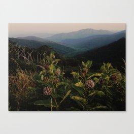 Milkweed in Shenandoah National Park Canvas Print
