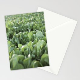 Food photography, macro photo, nature fine art, Italy, Sicily, Apulia, kitchen wall Stationery Cards