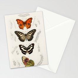 4 Vintage Butterflies Illustration Stationery Cards