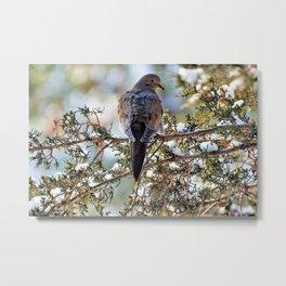 Christmas Dove Metal Print