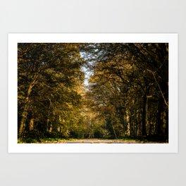 Autumn Forest Landscape Photography Color - Framed Print Art  Art Print