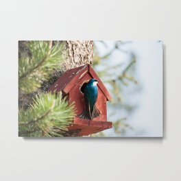Blue Swallow Photography Print Metal Print