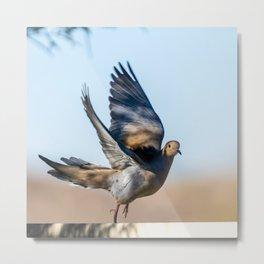 Dove Dancing in Shadows Metal Print