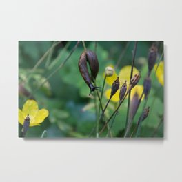 slug dancing on a poppy Metal Print