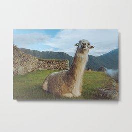 No Prob-llama - Art Print Metal Print